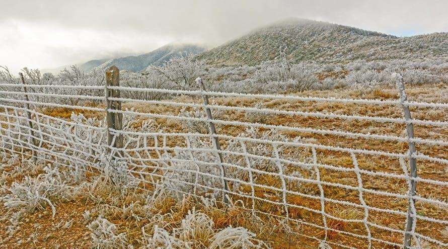 12.21 Winter Landscape Tips